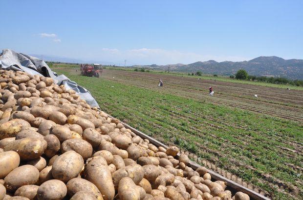 Patates fiyatı Suriye'den yapılan ithalatla 2 liraya geriledi