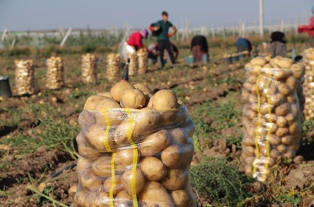 Niğde'de patates hasadı başladı…