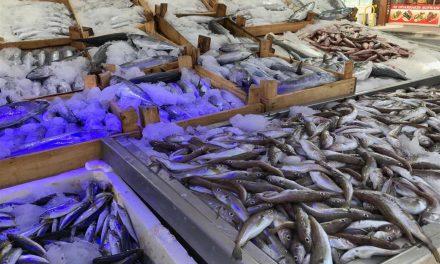 Karadeniz'de palamut bolluğu; fiyatı 5 liraya geriledi