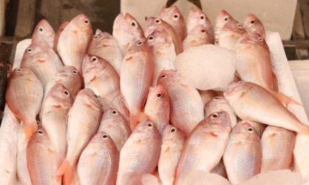 Avlanma Yasağının Sona Ermesiyle Tezgahlarda Balık Bolluğu Yaşanmaya Başladı