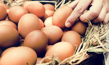 'Stoklar azaldı, 1 aylık yumurtamız kaldı'