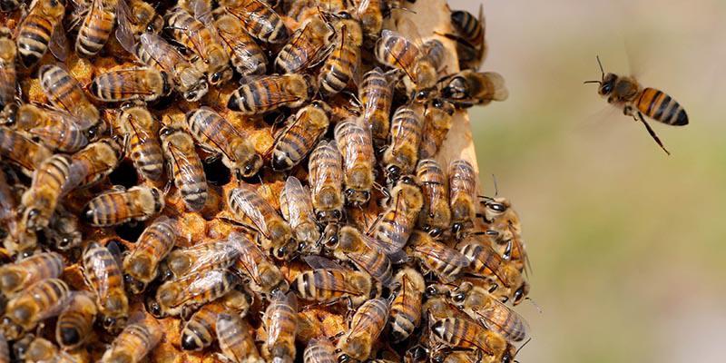 Bu arı, örümcekleri zombiye dönüştürüyor!
