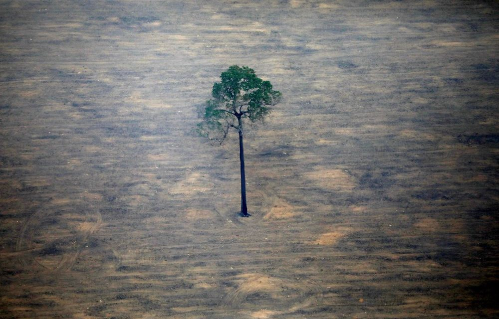 Amazon 49 yıla çayıra dönebilir