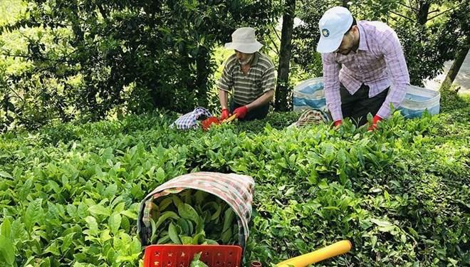 Türk çayı yılın ilk yarısında 7,5 milyon dolar kazandırdı