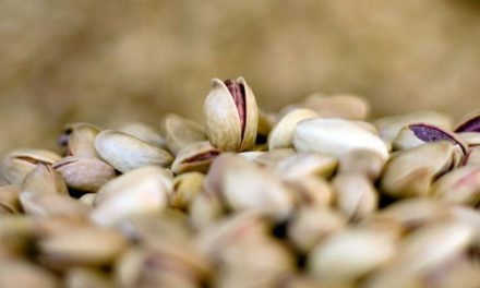 Fıstık fiyatları yüzde 200 artabilir